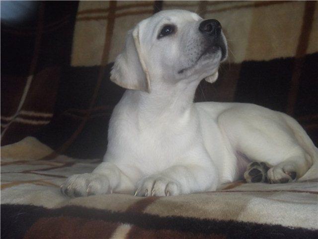 Наши щенки - Страница 7 80f4d4490805