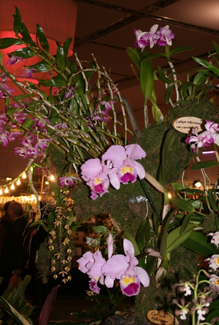 Выставка орхидей в Дрездене (март 2012г.) - Страница 2 E71ab4faf415