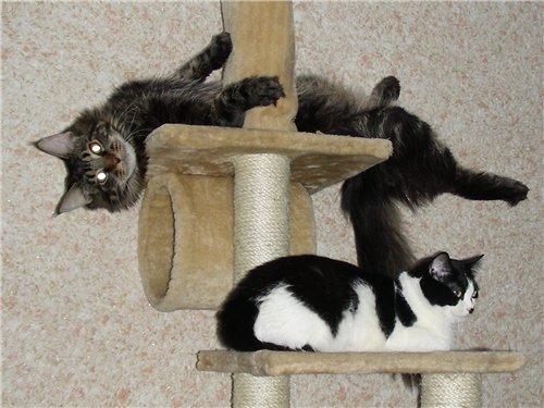 Каталог вяжущих котов Cc4db705cf49
