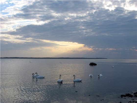 С любовью к Балтийскому морю Bcabec3de261