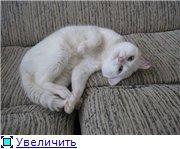 Наши любимые животные - Страница 3 34edbd6beaa2t