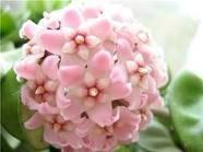 декоротивно-лиственные и красивоцветущие растения - Страница 4 8fa6d8ce0e43