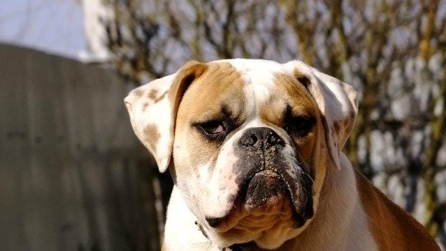Собаки питомника Carpen Diaz - Страница 2 Db536409a2ba