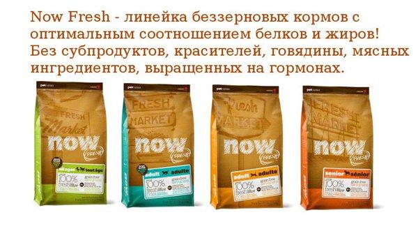 Интернет-магазин Red Dog- только качественные товары для собак! Feeaf542f0d9