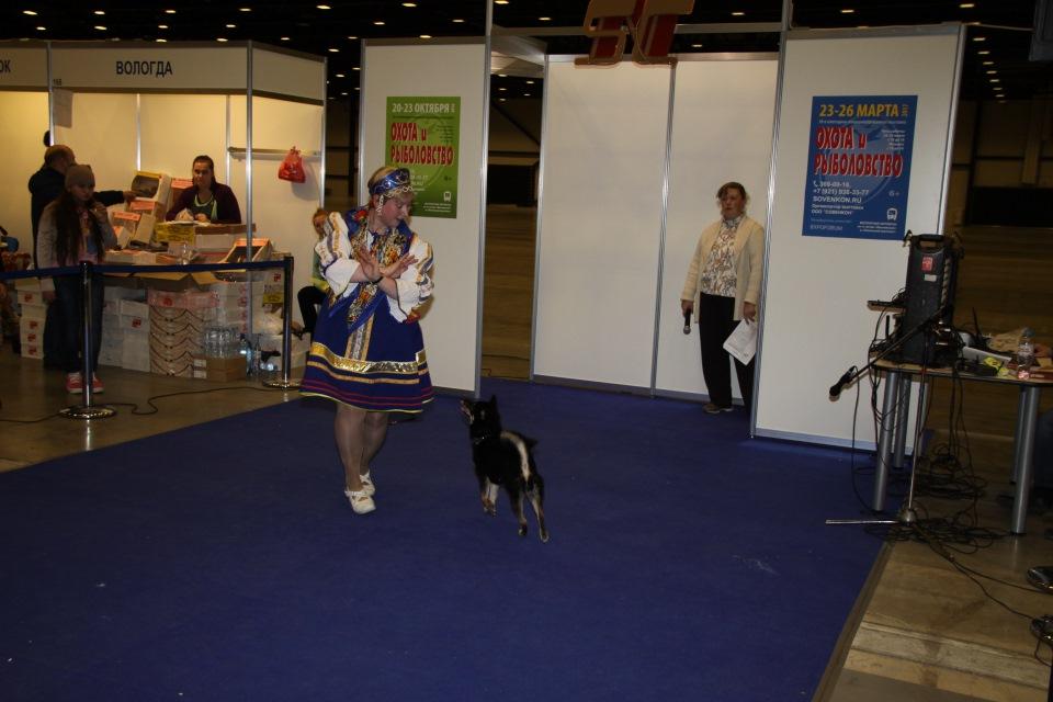 Танцы с собаками - Страница 3 Da3ca222b3b6
