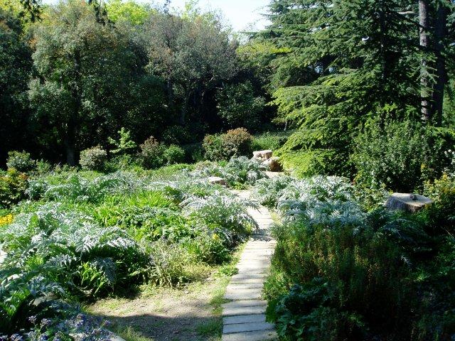 Крым. Никитский ботанический сад. 34ec3b701fb9