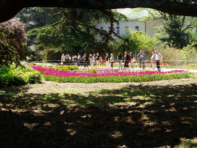 Крым. Никитский ботанический сад. Bf7081177b2f