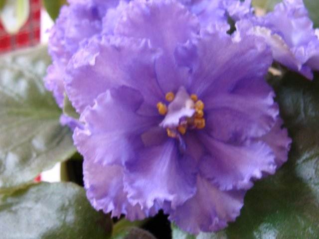 Мои цветочки - Страница 3 954f737ef414