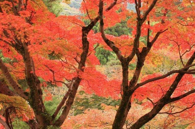 Японская культура и традиции. - Страница 3 67ad5ce4cf59