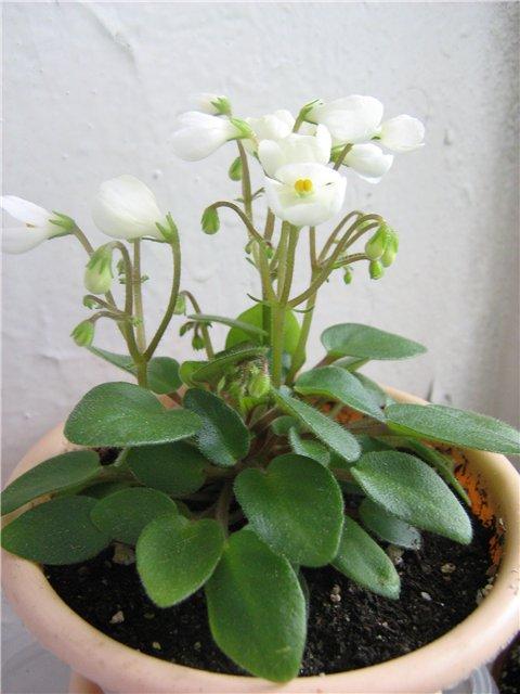 Моё цветочное богатство - Страница 21 954bef815d07