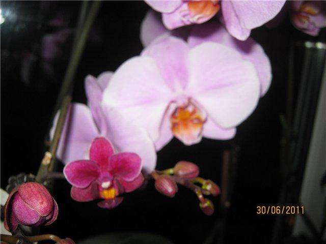 Разведение орхидей. - Страница 13 769989797107