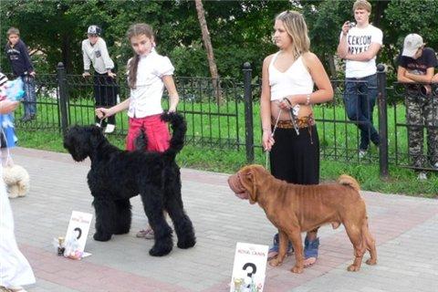21.08.2011 Региональная выставка собак всех пород 3596a884da0c
