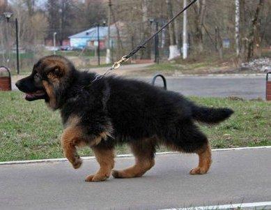 Наши собаки, друзья и гости, кот Мензурка - Страница 30 4224e869a15c