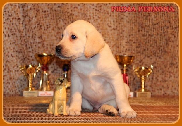 """Питомник """"Прима Персона"""". Мои собаки-моя жизнь! F77b2c4f7225"""