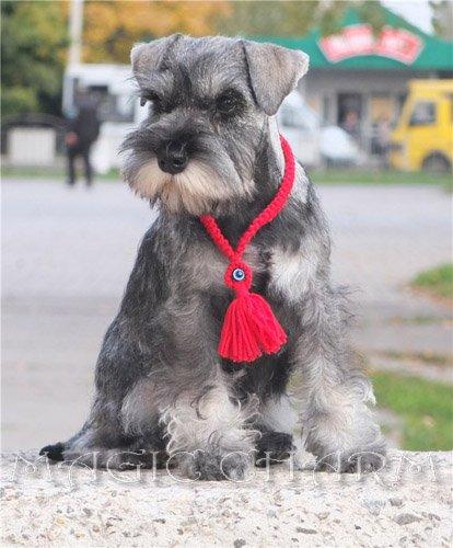 Magic Charm - ошейники, обереги, украшения и аксессуары для собак 2fccb69765a3