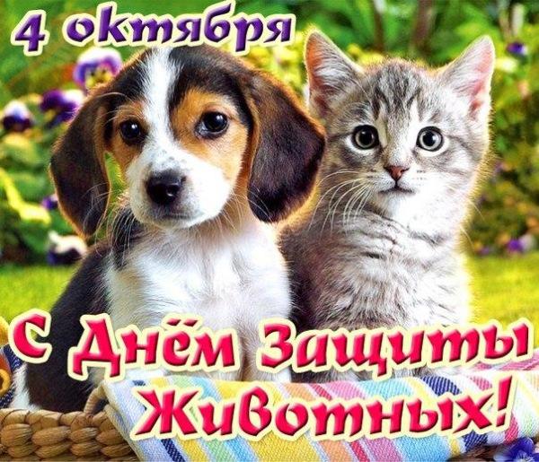 Интернет-магазин Red Dog- только качественные товары для собак! - Страница 4 25253a3b399b
