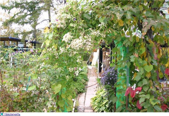 Цветущие лианы Bb04b46ea7a8t
