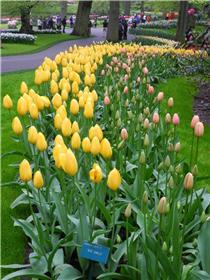 Рай тюльпанов или Кёкнхов - 2012 D319972ee0a3t