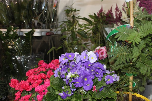 Выставка: Ландшафт и приусадебное хозяйство 2013, Алматы. 5e3ec4096552