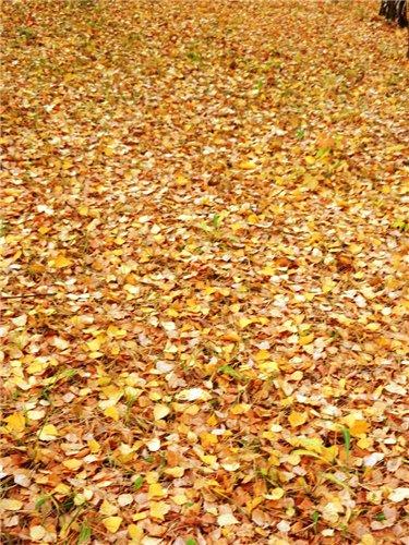 Осень, осень ... как ты хороша...( наше фотонастроение) - Страница 6 776c39564781