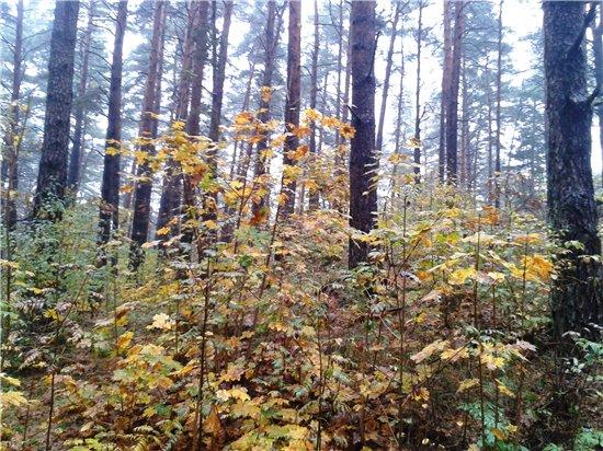 Осень, осень ... как ты хороша...( наше фотонастроение) - Страница 5 20a3da81143f