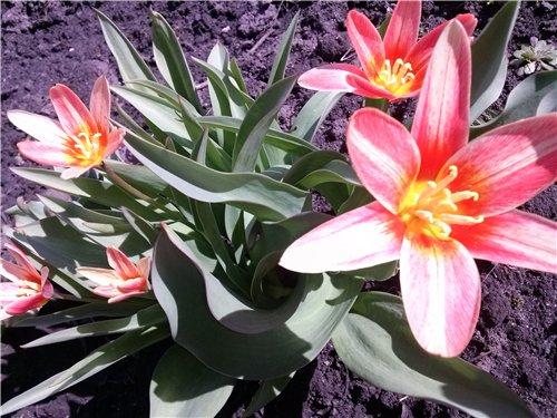И у цветов весна)) Da568fc9829a