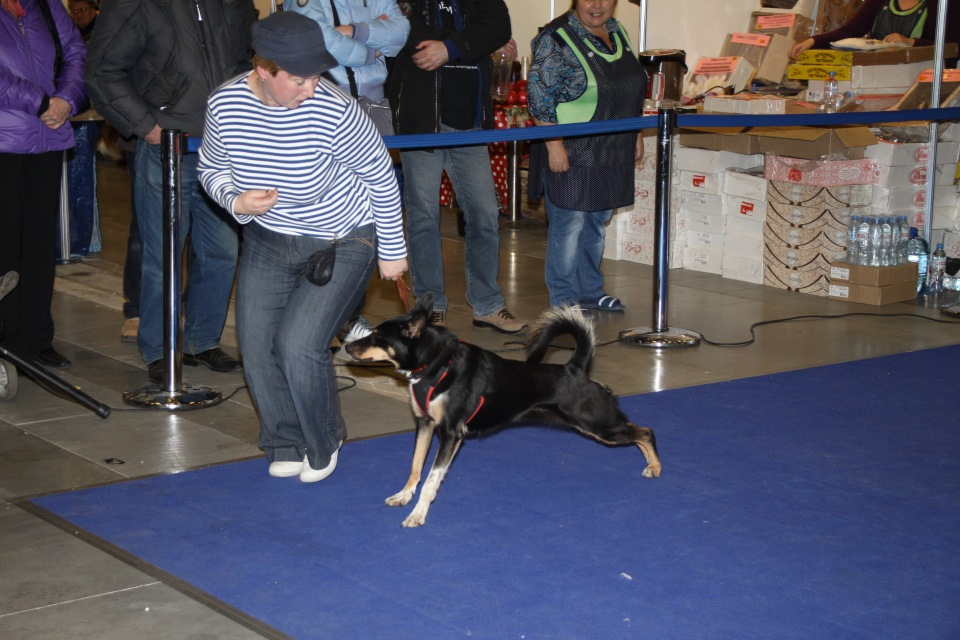 Танцы с собаками - Страница 3 7d148edab489
