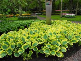 Рай тюльпанов или Кёкнхов - 2012 04bf099be764t
