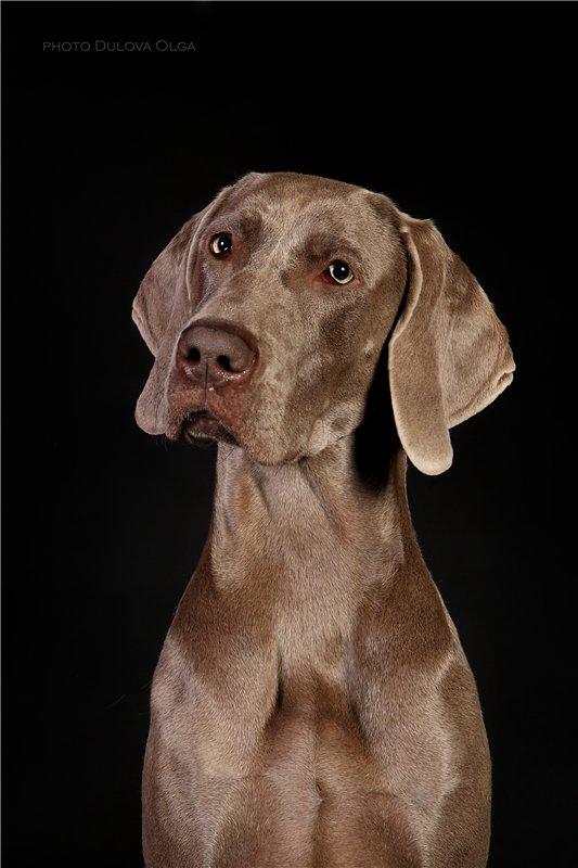 """Питомник """"Aurum Dog"""" 0e56c7725652"""