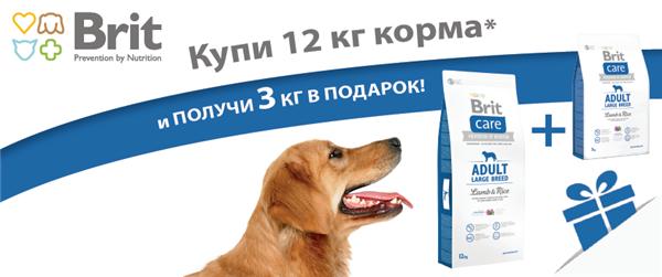 Интернет-магазин Red Dog- только качественные товары для собак! - Страница 4 B8e05197b833