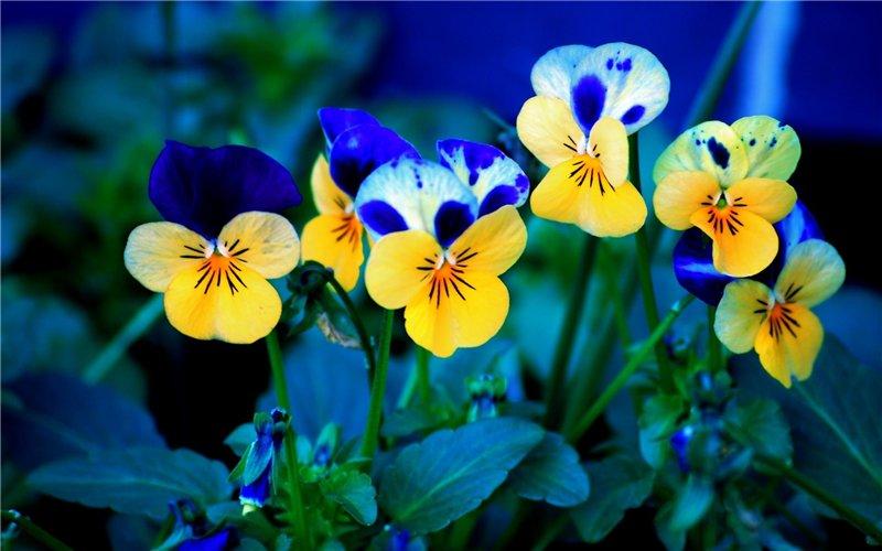 Светика-семицветика  дергаем за ушки )))))  F89e47fcf4f6