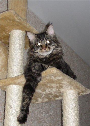 Каталог вяжущих котов 704af0e4dbc7