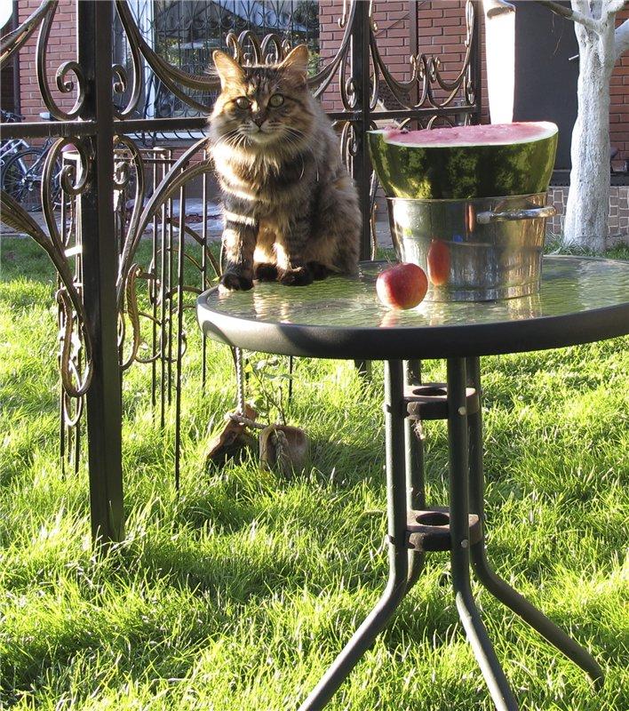 Домашние любимцы Кошки и Собаки C4f206a24093