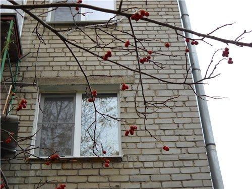 "Фотоконкурс ""Осенняя кантата"" Cc481325a183"