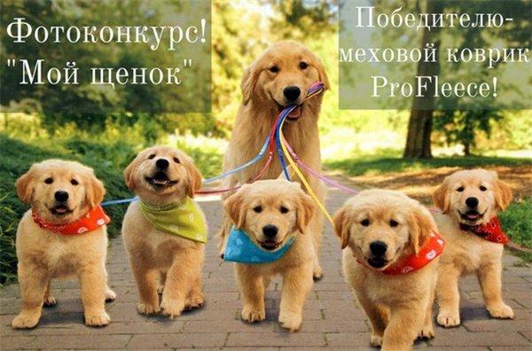 Интернет-зоомагазин Red Dog: только качественные товары для  - Страница 7 2aaaef36e687