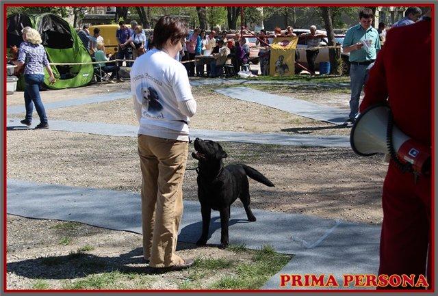 """Питомник """"Прима Персона"""". Мои собаки-моя жизнь! - Страница 2 9228227fc8a8"""