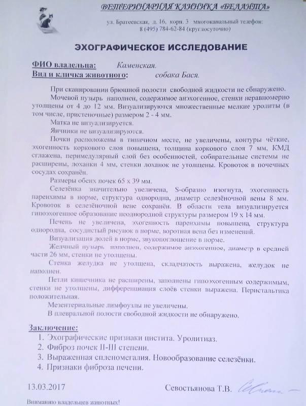 Москва, Бася (метис), 2005 г.  - Страница 5 490308becb60
