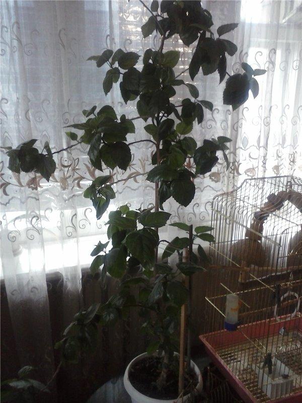 Продают комнатные растения в Астане,срочно! 0d091a355228