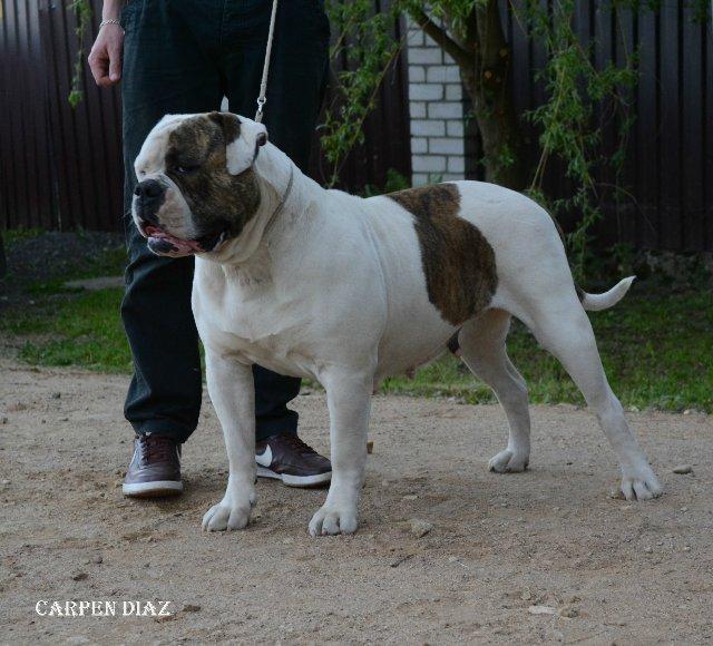 Собаки питомника Carpen Diaz - Страница 2 6c78e4418084