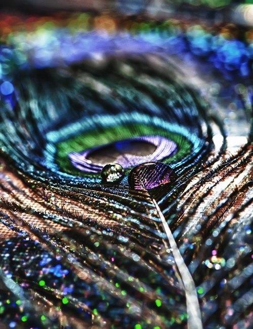 Форум Магов-Познание Магии-Орден Грааля Миров - Портал Dc80cf2d6cba