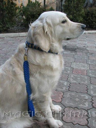 MAGIC CHARM - обереги, ошейники, украшения, ринговки и другие аксессуары для  собак и кошек. E216d6b3365c