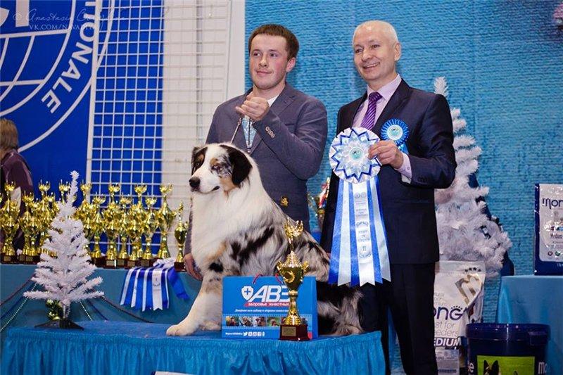 Выставочные успехи наших собак - 5 - Страница 30 106871afb13c