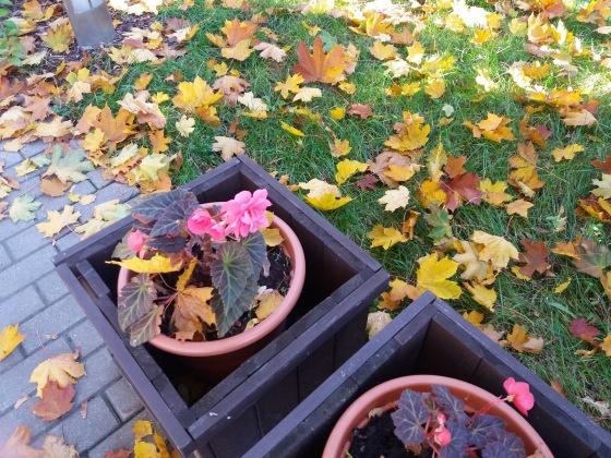 Осень, осень ... как ты хороша...( наше фотонастроение) - Страница 8 Bd6c075ee7ba