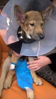 Малыш совсем щенок, сбила машина. Срочно нужна операция!!! 1ab822c05e9a