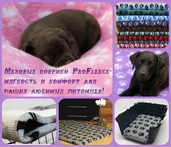 Интернет-магазин Red Dog- только качественные товары для собак! - Страница 5 D5a2f3167819