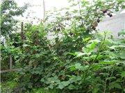 смородина и другая ягодка - Страница 4 7efdbc61282ft