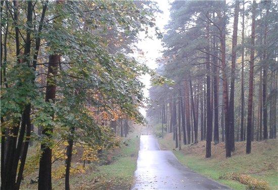 Осень, осень ... как ты хороша...( наше фотонастроение) - Страница 5 Dd43ebfd3c45
