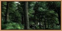 Лесные чащобы