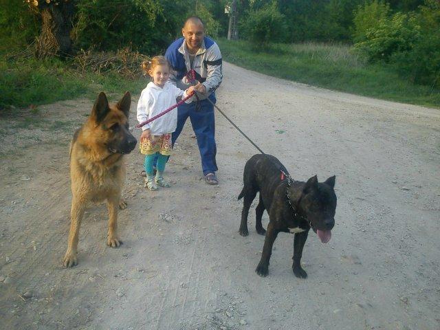 Наши собаки, друзья и гости, кот Мензурка - Страница 30 E9b1181bf353
