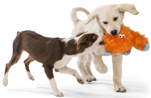 Интернет-магазин Red Dog- только качественные товары для собак! - Страница 7 0a9f1dd19270